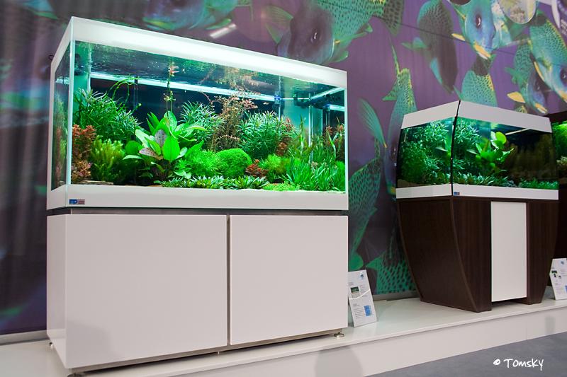 mp-Aquarium
